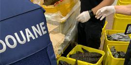 bestrijding van de illegale handel in en transport van dieren en planten