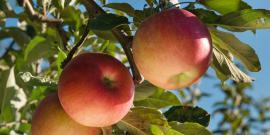Picture Appels
